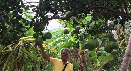ปฏิบัติงานโครงการพัฒนาพื้นที่เกษตรน้ำฝนอันเนื่องมาจากพระราชดำริ อำเภอเขาวง