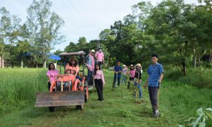 กิจกรรมดูแล บำรุง รักษาต้นไม้ เนื่องในวันรักต้นไม้ฯ